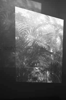 New Reflection (Texture of image) #greenhouse 2